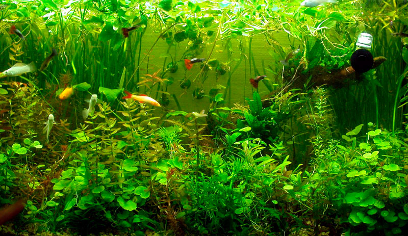 Specializing in freshwater fish, plants and CO2 systems.